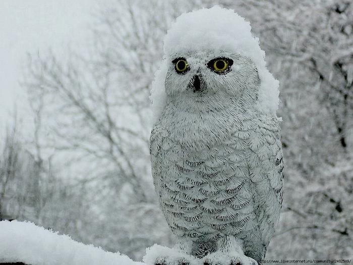 Картинки по запросу Животные которые рады снегу