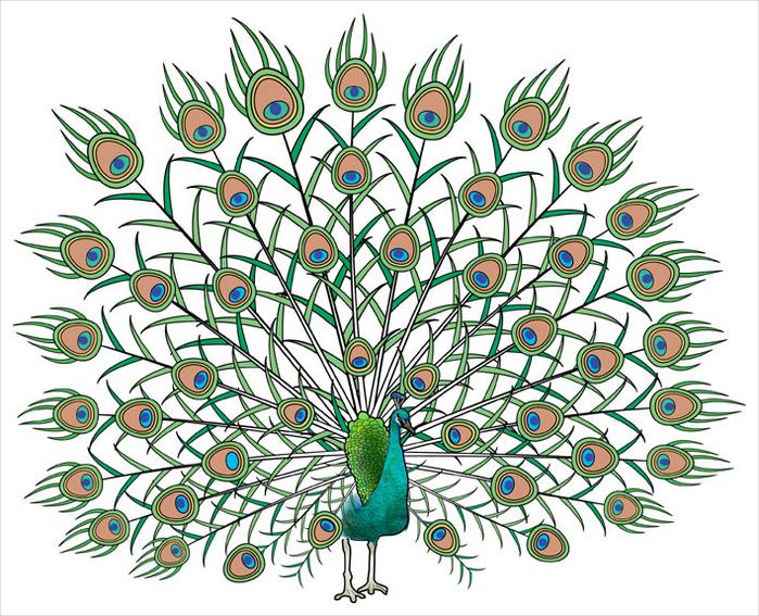 Очень красивые раскраски птиц. Обсуждение на LiveInternet ...