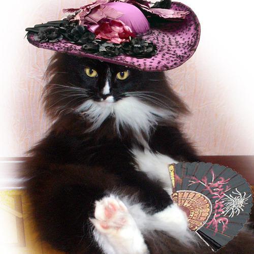 гифы котята в шляпах советские