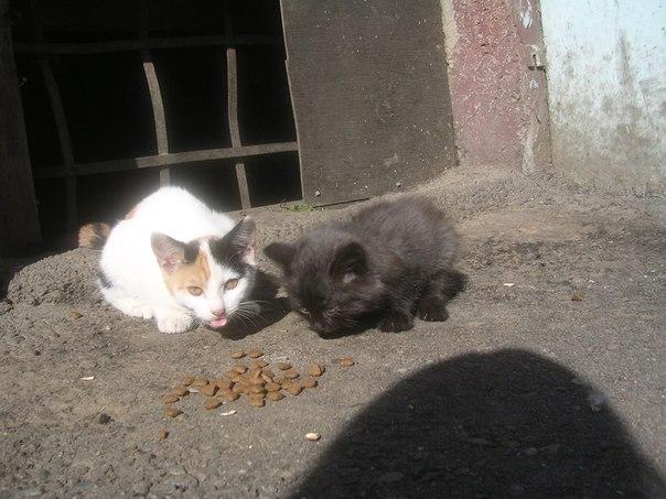 подготовили для бездомные котята фото с адресом хвост