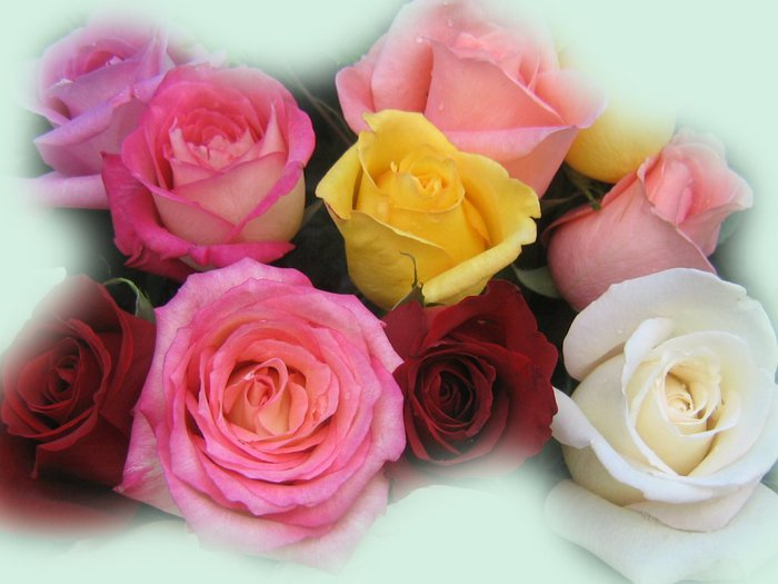 roses_bouquet_3568 (700x525, 53Kb)