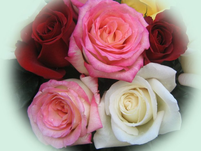roses_bouquet_3566 (700x525, 53Kb)