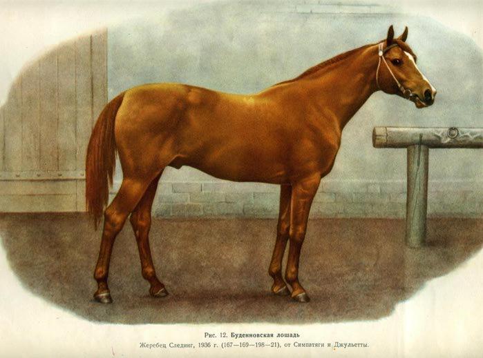 породы лошадей фото с названиями по алфавиту соблазнительные звезды настолько