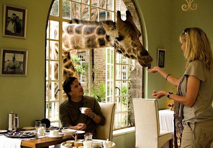 giraffe-manor-2 (700x486, 151Kb)