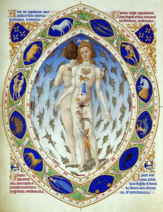 anatomical_man-788x1024 (538x700, 171Kb)