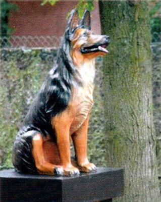 Картинки по запросу old german shepherd dog