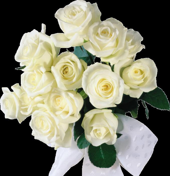Открытка красивые белые розы с днем рождения