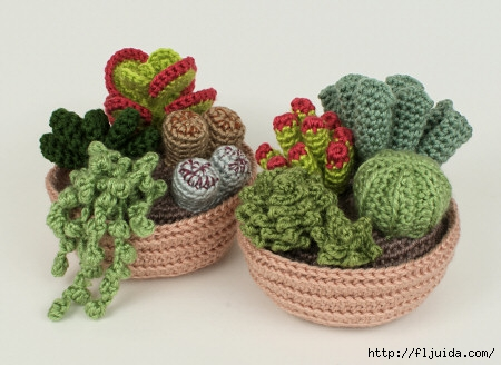 succulent_collections (450x328, 102Kb)