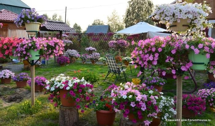 Красивый домик в деревне петуния фото