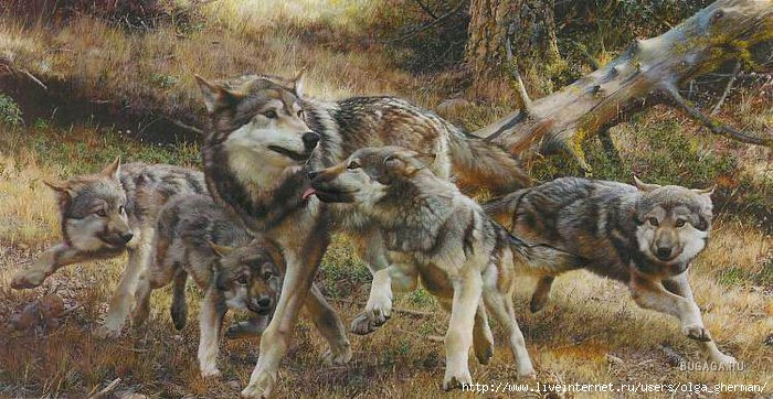 1257955724_timber-wolf-art-prints (700x362, 219Kb)