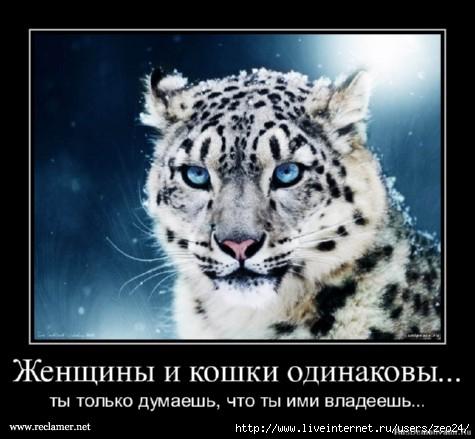 http://img1.liveinternet.ru/images/attach/c/7/98/202/98202069_92793532_large_dem25.jpg