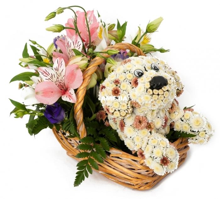 Фото незабудки цветы полевые косметологи