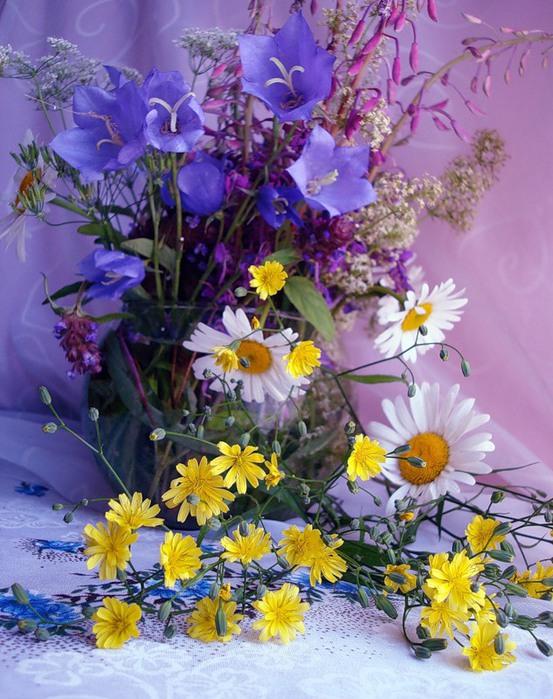 Соликамск красивые, открытки с полевыми цветами без надписей