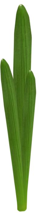4391866_ditab_leaf1b (129x700, 68Kb)
