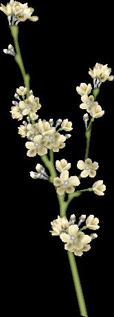 1368216155_blossom4 (166x459, 54Kb)