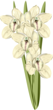 1368217135_flowers4 (171x353, 63Kb)