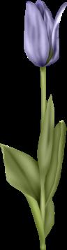 1368218215_tulip7 (96x358, 27Kb)