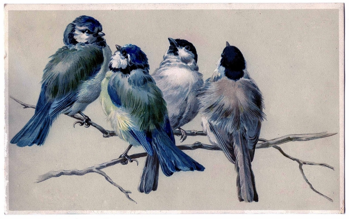 винтажные птицы. картинки для декупажа (6) (700x440, 240Kb)