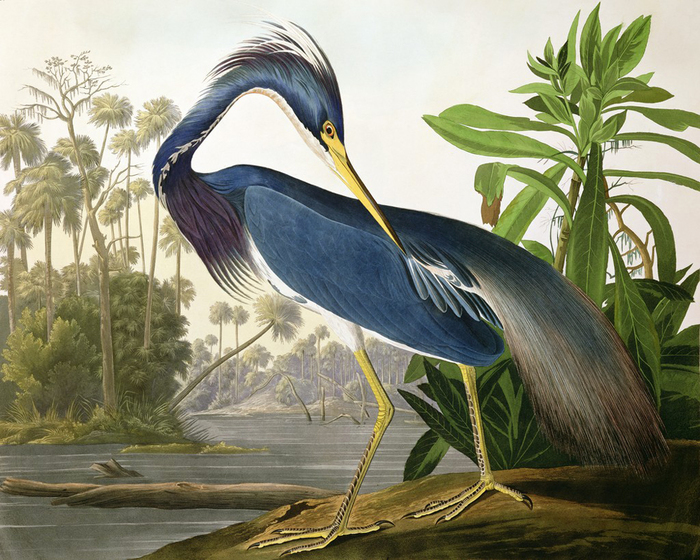 винтажные птицы. картинки для декупажа (7) (700x560, 384Kb)