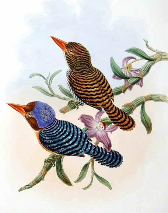 винтажные птицы. картинки для декупажа (10) (552x700, 285Kb)