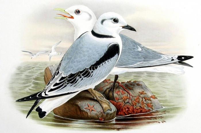винтажные птицы. картинки для декупажа (12) (700x462, 256Kb)