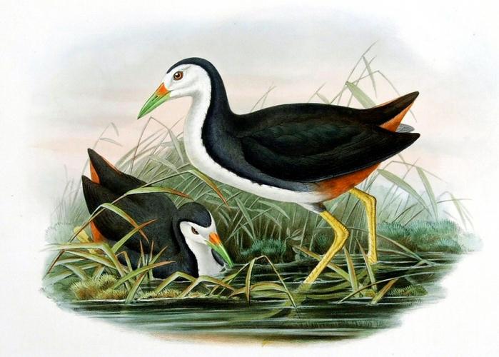 винтажные птицы. картинки для декупажа (14) (700x500, 284Kb)
