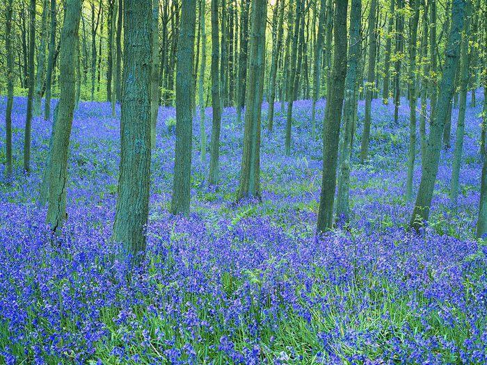 На лесной поляне 83626009 (700x525, 166Kb)