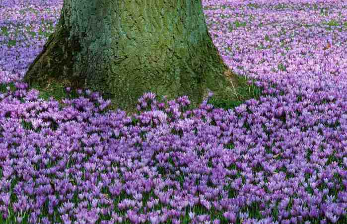На лесной поляне cvety_flowers_82 (700x451, 42Kb)