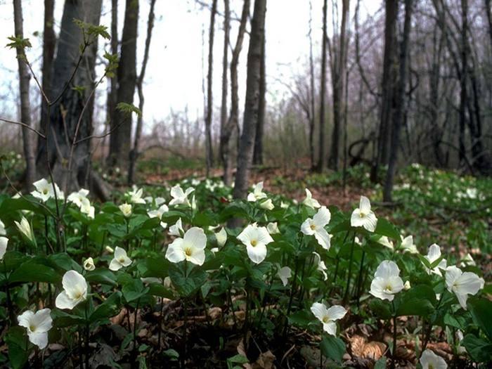 На лесной поляне 014 (700x525, 66Kb)