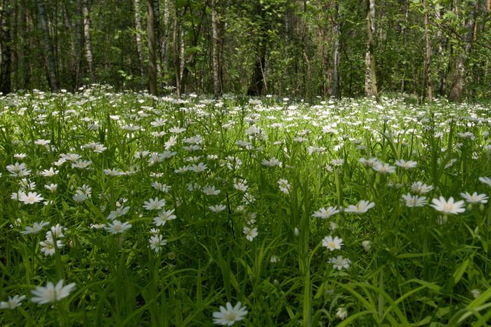 На лесной поляне 1038746 (700x466, 199Kb)