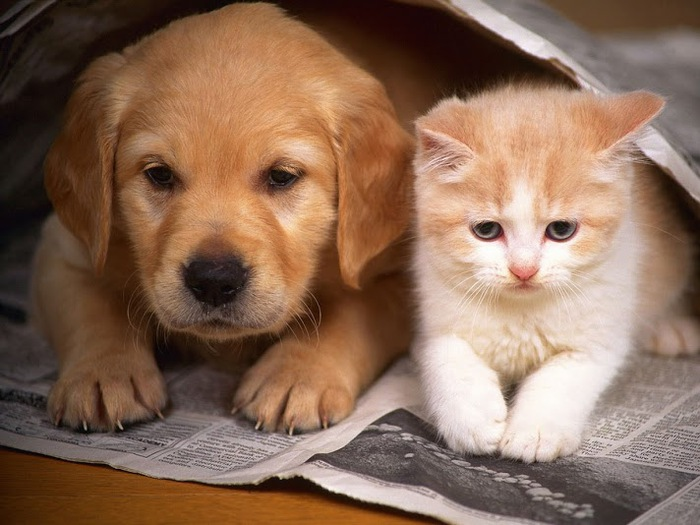 cat-and-dog-wallpaper-for-ipad-2,2560x1920,ipad-3-wallpaper,1337 (700x525, 103Kb)