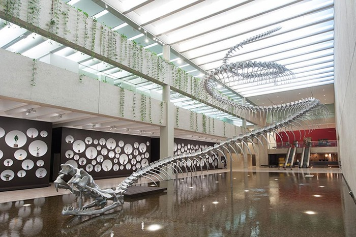 Скелет 53 метровой гигантской змеи