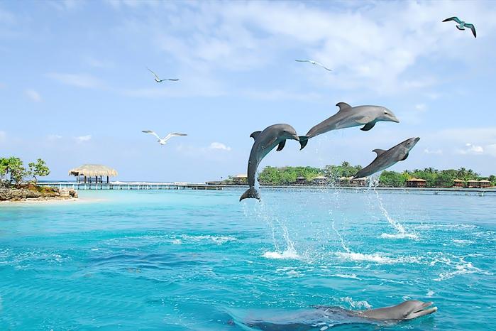 обитателя океана - дельфины