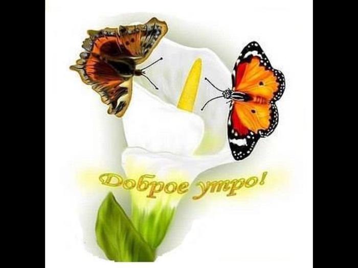Для, открытки с добрым утром бабочки