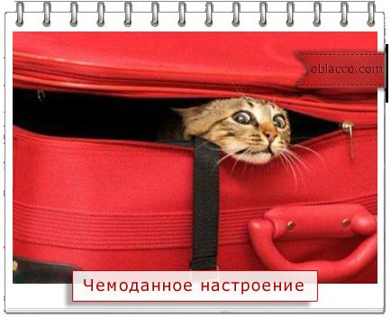 декор старых чемоданов/3518263_102174546_3518263_chemodan (434x352, 197Kb)