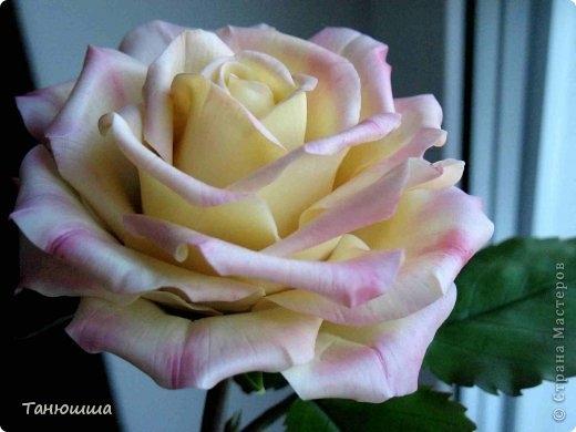 Розы из холодного фарфора и как сделать молды для лепки листьев (19) (520x390, 95Kb)