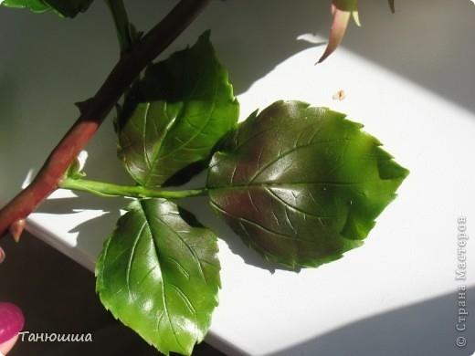 Розы из холодного фарфора и как сделать молды для лепки листьев (27) (520x390, 91Kb)