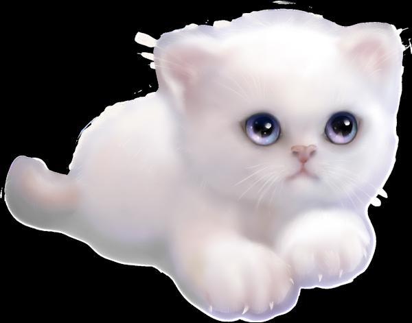 Кот белый картинки для детей, летие мальчику