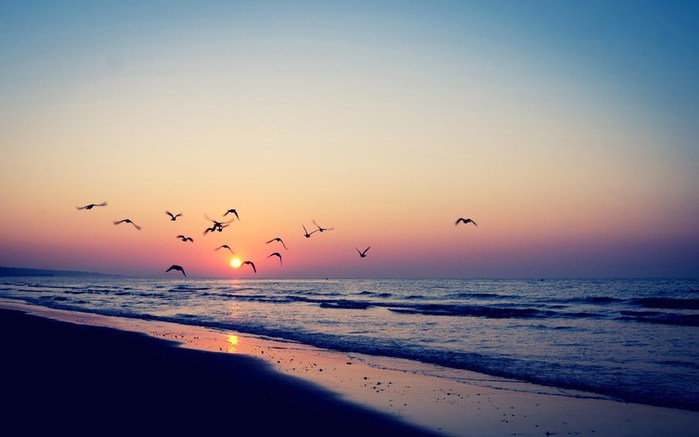 Sunset-Birds-Sea-Beach-Wallpaper (700x437, 42Kb)