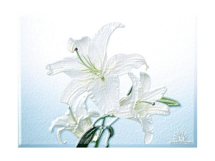 intervyu-belladonna-onlayn-bolshie-siski-yaponki