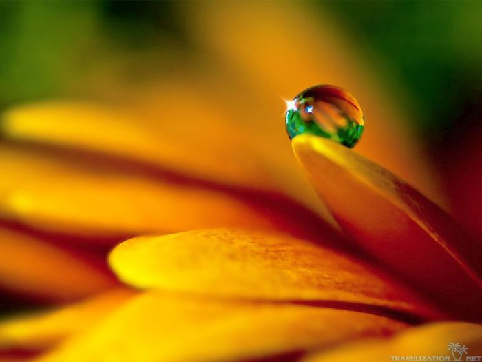 water-drop-on-petal-of-daisy-wallpapers-2560x1920 (700x525, 28Kb)