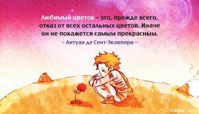 Цитата к цветов 91