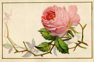 Old-Pink-Rose-Image-GraphicsFairy (400x263, 45Kb)