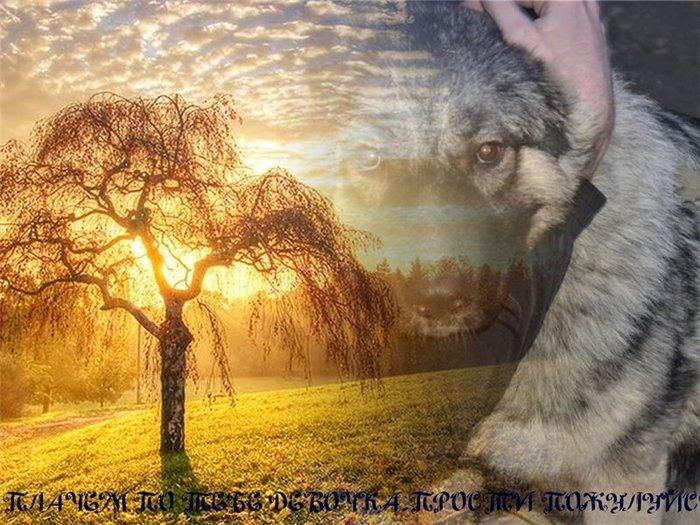 картинки об утрате собаки подбирать