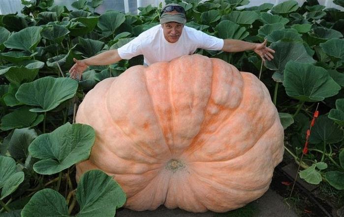 гигантские овощи с аляски 2 (700x440, 326Kb)