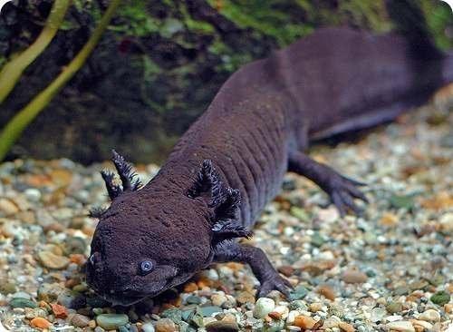 самые удивительные и необычные существа планеты - Самое интересное ...