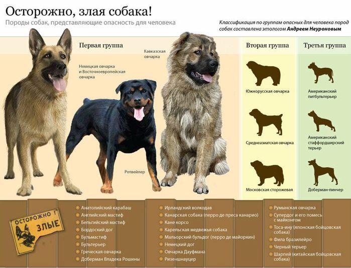 dog_66557877688 (700x534, 74Kb)