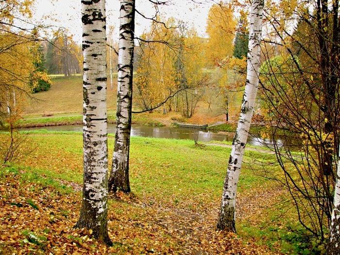 переводить ручную береза картинки весна лето осень это пустяк