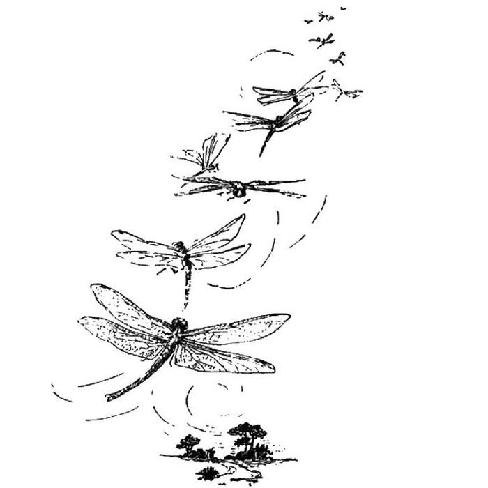 Стрекозы в картинках с надписями