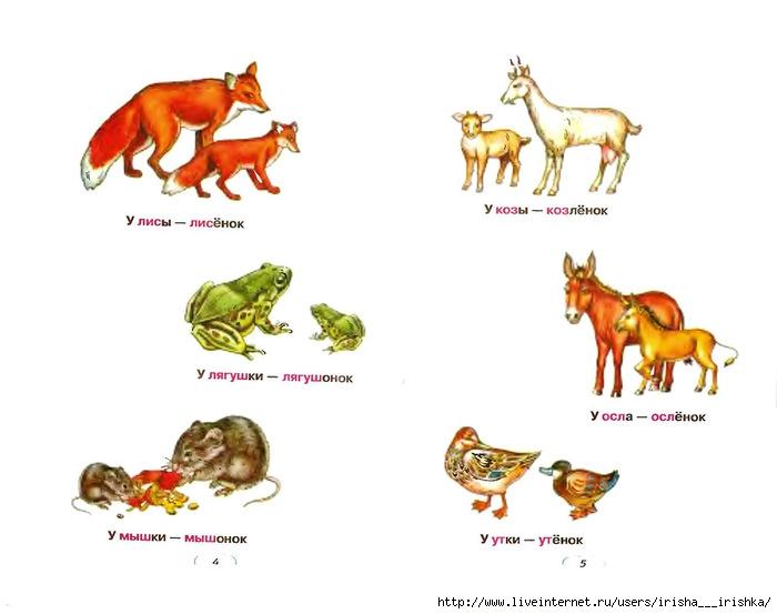 Детеныши животных и их мамы картинки с названиями дикие